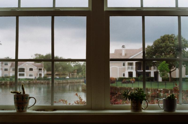 Bedroom_window_Plants