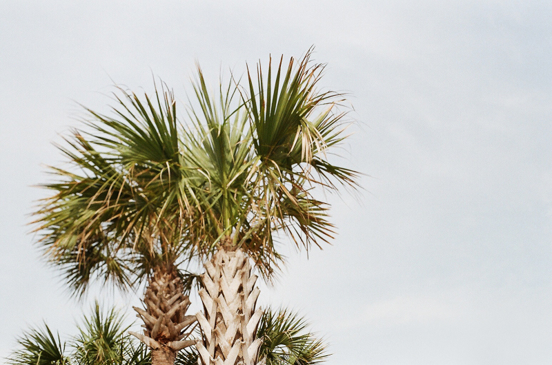 Palm_Trees_Sky