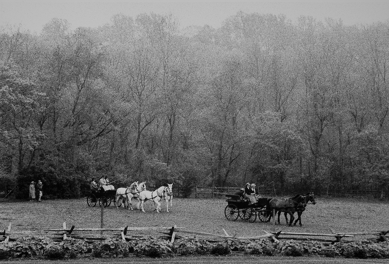CARRIAGE-DRIVE-FROLICH'S_ESTATE_8901
