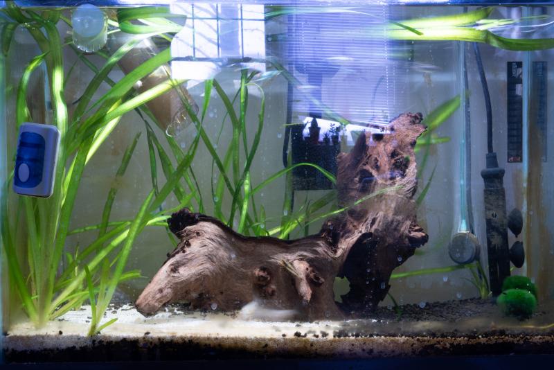 Tina-Captivity-Apartment-Aquarium-Fish-Wood