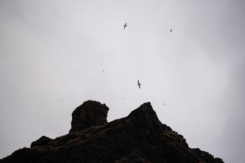 Tina-Iceland-Travel-Winter-Bird-Seagull-Mountain-Cloudy
