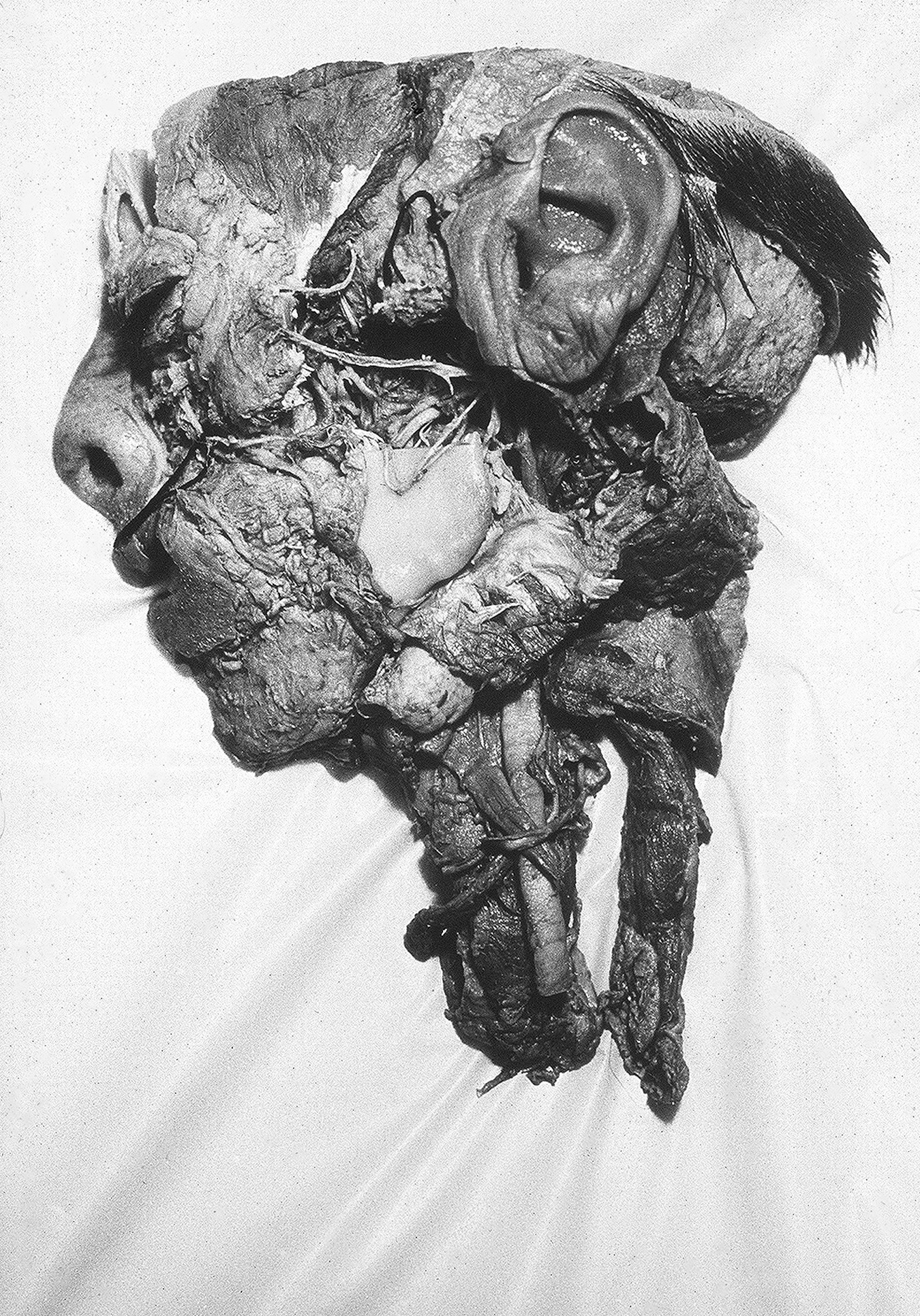 Tony_Ward_early_photography_work_beginning_anatomy_half_head_profile-Dissection. Photo: Tony Ward, Copyright 1977.